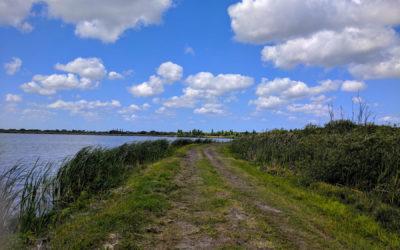 Se7en Wetlands: Lakeland's Newest Park