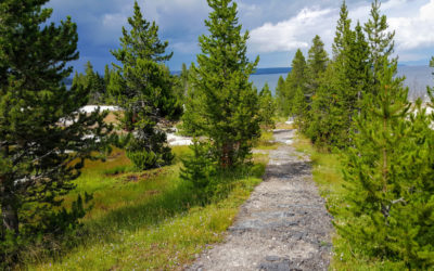The Best Apps for Your Next Hiking Trip